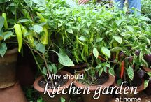 kitchen garden / How to maintain your kitchen garden : Currently the kitchen garden has grown increasingly common. People especially Housewife and old man people time wisely is to consider the most appropriate garden. You can grow in kitchen garden many fruits, vegetables, spices, flower plants in the kitchen garden. For best results is necessary to understand the specifics of the kitchen garden. You can grow in your garden see more...naturebring.com
