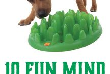 Intriguing Pet Products / by Humboldt Pet Supply