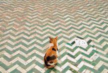 Ceramic Tiles II / by Richard Fahey