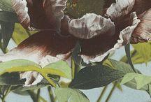 Botanical Album