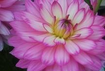 Flowers / by Angela Boles Mullins
