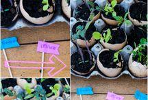 Gardening / gardening, container gardening, balcony gardening, gardening tips, gardening hacks, gardening diys