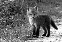 animals :o / by shenoah reban