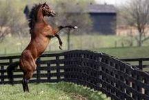 Horsepower!