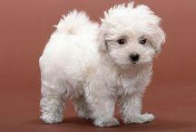 Cute Doggys <3 / love love love