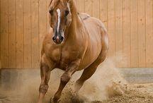 Paarden en western