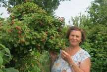 малина. ягода