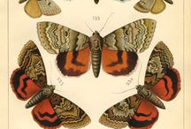 Butterflies & Insects Inspirations / by Alison Foster