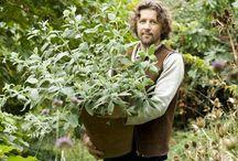 November Gardening