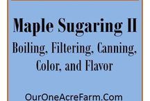 --Maple Sugaring-- / Tapping maple trees to make maple sugar