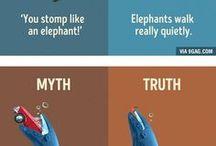 Myth vs True