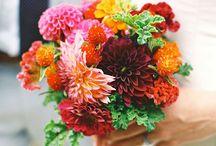 Nunta multicolor/Multicolour Weddings