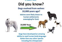 Did You Know? / Fun facts about dogs!