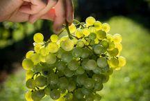 Grape Shot!