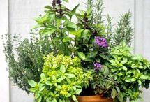 Fűszerek & növények