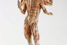 strange anatomy :D