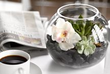 Modern Style / by B Floral