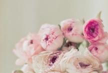 Flower fabulosity / Flower fabulosity