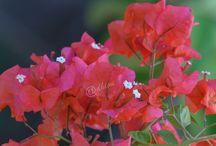 Φύση / Φύση, Λουλούδια, Καρποί, Ζώα