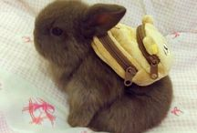 Cutey baby bunnies