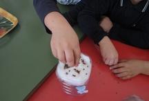 esperimenti / attività scolastiche