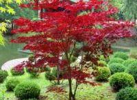 Jardins Japonais / Zen attitude
