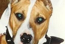 DOGS / by Linda Havis