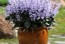 flores de sacada ou jardim