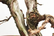 Boutique Bonsai / All things Bonsai and drawing inspiration from the world around us.
