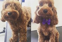 Psy przed i po
