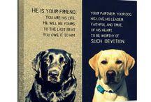 Pet thangs / by Danielle Mauri