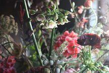 arrangement alliums
