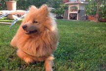 Il mio cane ha stile!
