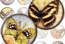 Mariposas/Butterflies