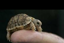 Turtle / by Bonnie Parker