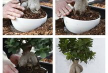 LOVE, PLANT, WORK. / Succulents, bonsai and others indoor and outdoor tropical plants Paganopiante. Produzione di succulente, bonsai e di altre piante verdi e ornamentali da interno ed esterno.