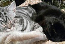 Piccoli animali / I gatti delle mie amiche!