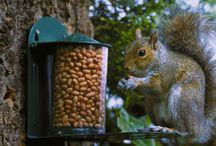 Les Mangeoires Au Jardin