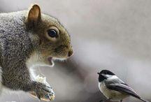 Squirrel, hedgehog, deer,