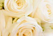 Avalanche Rose Inspiration