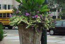 Gardening - Container / by Cindy Savidge