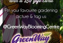 Win a $50 Gift card from US! / Win a $50 gift card by following GreenWay Blooming Centre, and then tagging us in your favourite gardening picture  Contest runs from August 1st until August 31st! Check out our