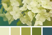 Olive Green Color Palette