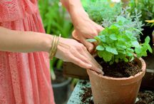 Les mains dans la terre / Tous au jardin ... Semer, planter, rempoter, il faut s'y mettre !