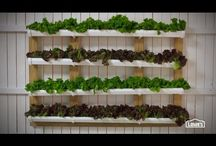 Vertical Garden / by Amy A