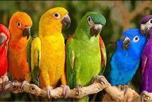 Over the Rainbow.....!