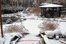 Mój ogród zimą /Winter garden in Silesia