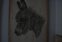 Pencil drawings  / by Gisela Sedlmayer
