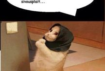 humour noir animaux