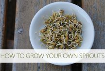 Food - Soaking/Sprouting